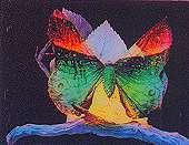 Métamorphoses d'un papillon - Flipbook d'après Gaston VELLE (1904) - Image 1