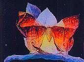 Métamorphoses d'un papillon - Flipbook d'après Gaston VELLE (1904) - Image 2