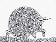 FANTASTIC CELL - un film de Mirai MIZUE (Japon) - photogramme