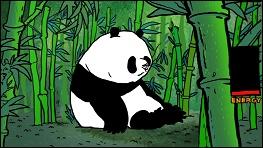 Pandas - a film by Vizar MATUS - image