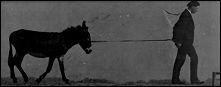 ANE - un film de Etienne-Jules MAREY - image