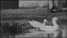 OISEAU - un film de Etienne-Jules MAREY - image
