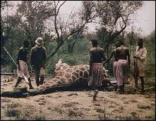 GIRAFFE-HUTING IN OUGANDA - Documentary (France, 1910) - Image